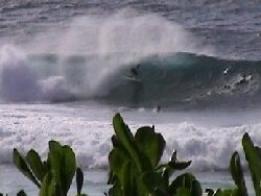 Level 4 Master Surfing Coach